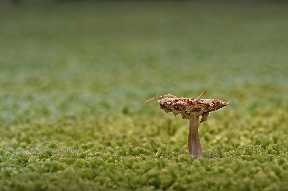 Mystery Mushroom by Dvemor