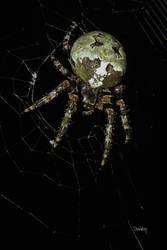 Orb Spider detail