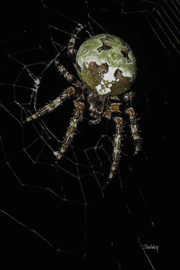 Orb Spider detail by CapscesDigitalInk