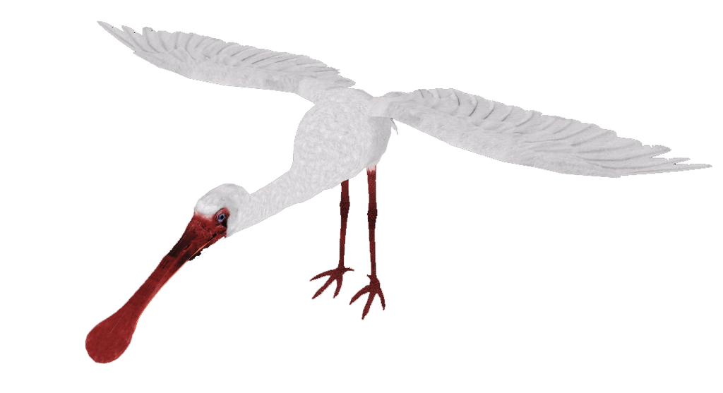 Zt2 African Spoonbill By Scottslive21 On Deviantart
