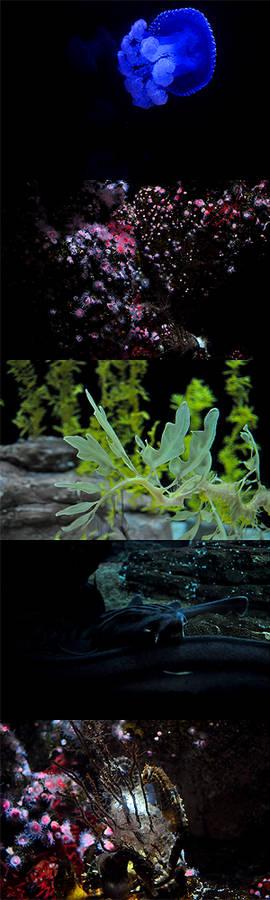 the aquarium i
