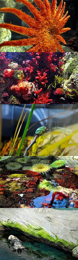the aquarium ii