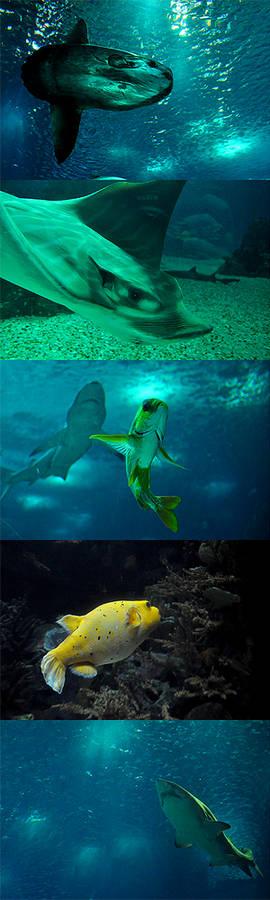 the aquarium iii