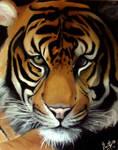 Panthera tigris-The Big Cat..