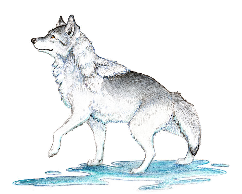 Ice Wolf of Creation by Stormslegacy
