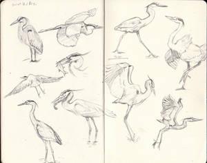 Heron Sketches