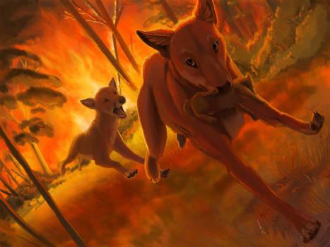 Dingo Fire