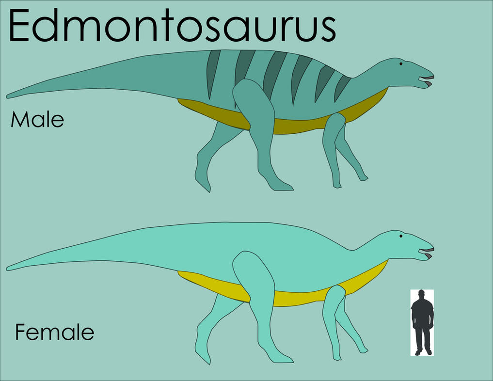 Edmontosaurus Size Comparison by LouJunior on DeviantArt