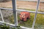 Minecraft Pig IRL
