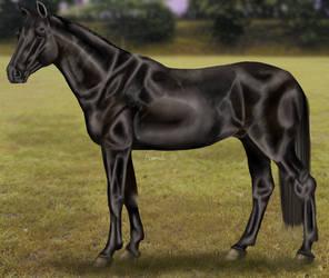 Black stallion by Almuli
