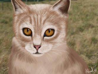 Kitty by Almuli