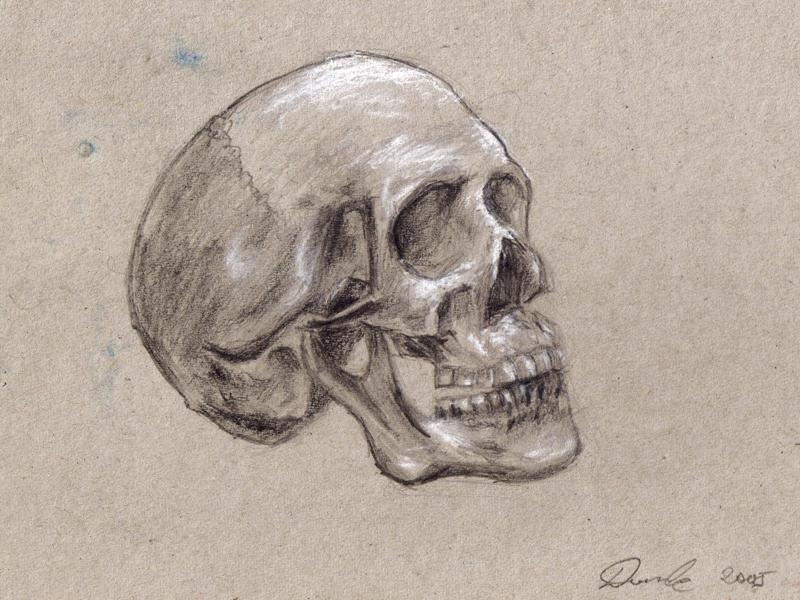 Skull by konstancja
