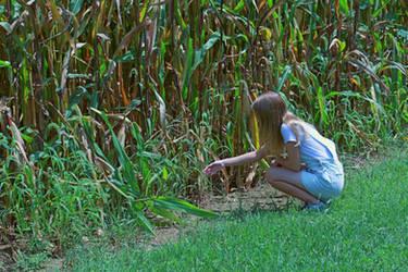 Corn by graciemusic1