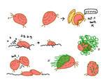 Clam Shrimp
