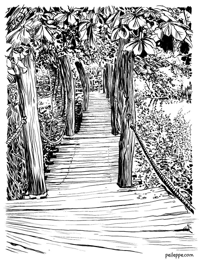 Jungle bridge by peileppe