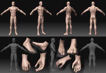 Woody anatomy W.I.P. by 0202742