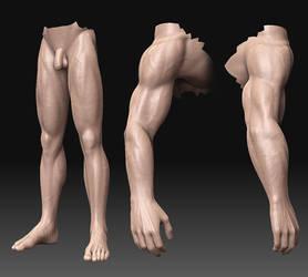 Woody anatomy W.I.P. 2 by 0202742