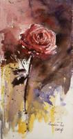 Rose by rainbowtse