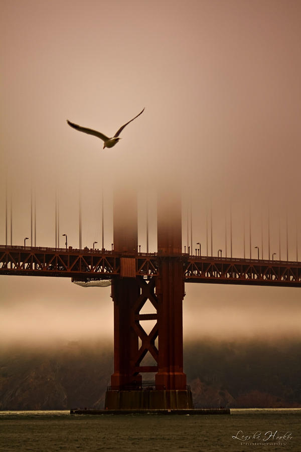 Flying Into the Fog by LeashaAHooker
