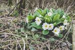 29 Janvier - Comme une fleuraison (21/26)