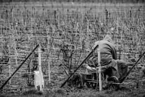 12 Fevrier : Le travail des vignes commence by InterludePhoto