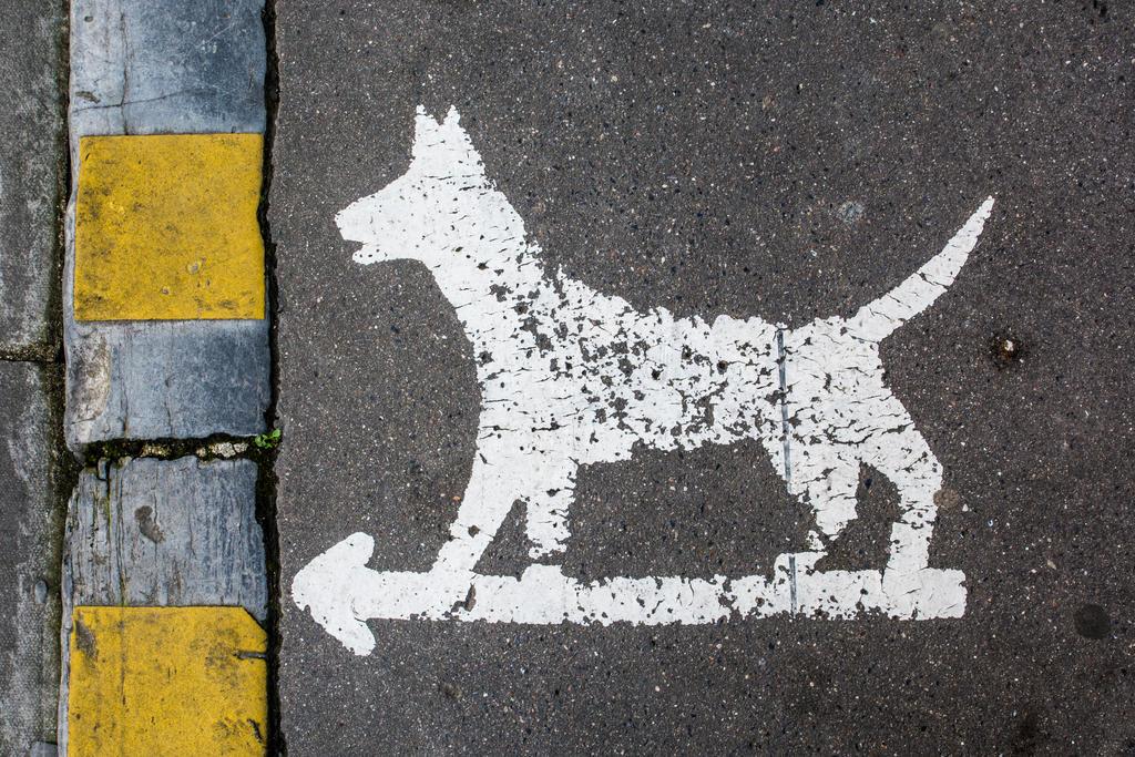 14 Fevrier : Chiens, changer de trottoirs ? by InterludePhoto