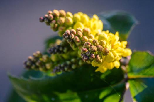 23 Fevrier : Le printemps arrive