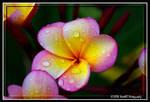 Droplets of Beauty