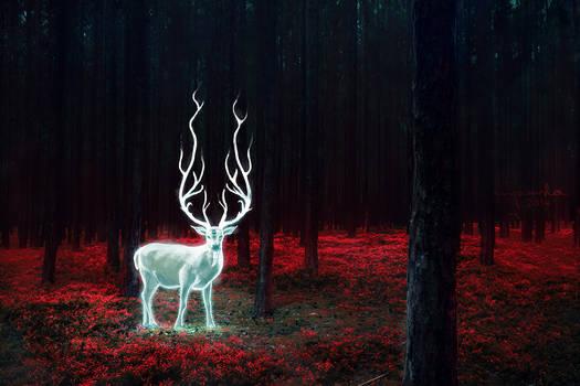 A deer.