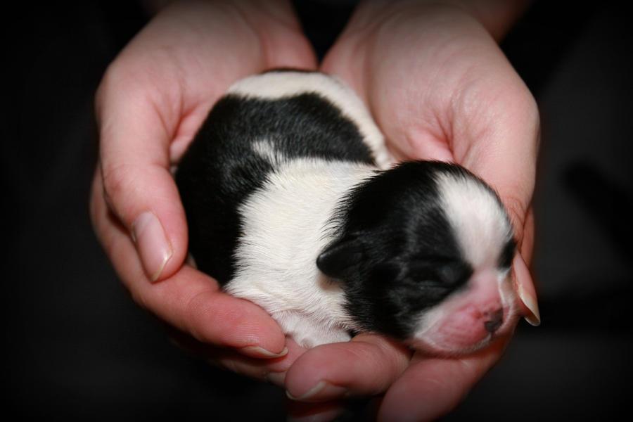 Puppy 2 by GQkid