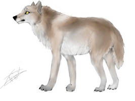 Loup fauve by BlastOfWinter