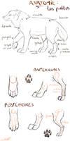 Anatomie by BlastOfWinter