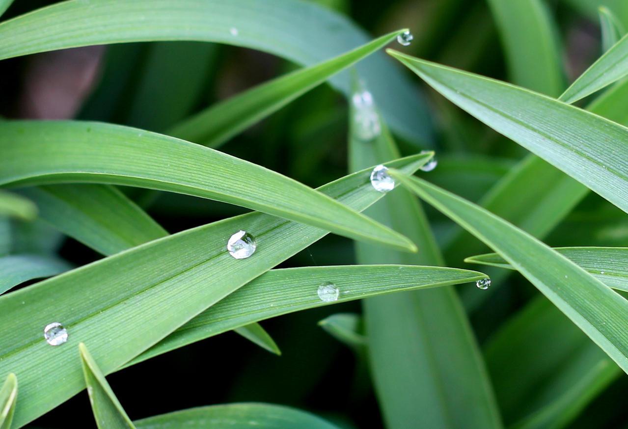 water pearls by watari-yumiko