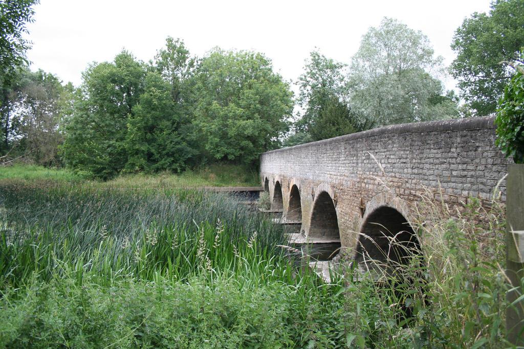 Oakley Bridges 1 by tammyins