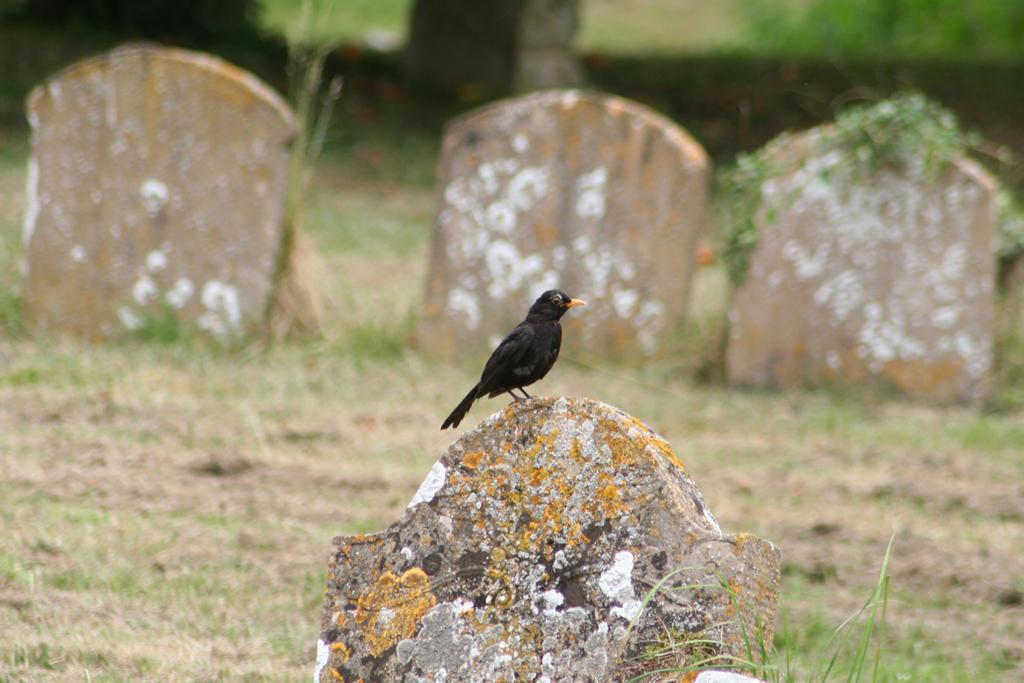 Stone Perch by tammyins