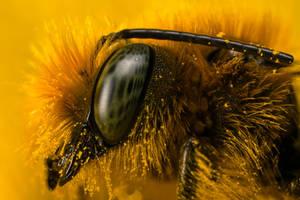 Miner Bee at 4x by dalantech