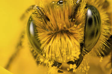 Miner Bee Head on at 4x by dalantech