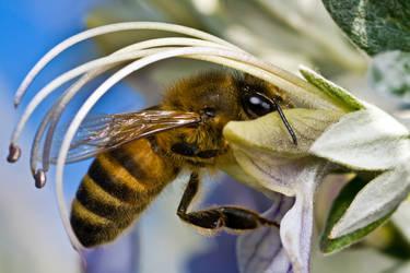 Pollination by dalantech