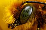 Miner Bee at 5x