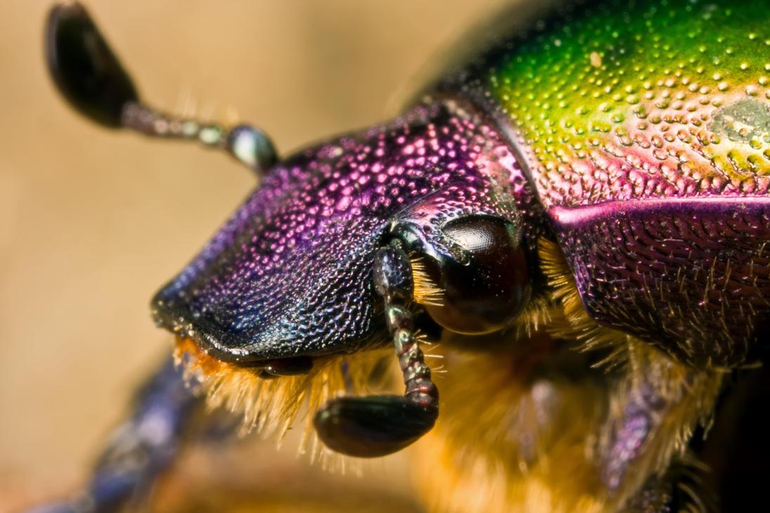 June Bug June Bug at 3x by Dalantech