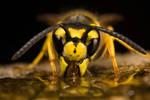 Wasp Reflection III