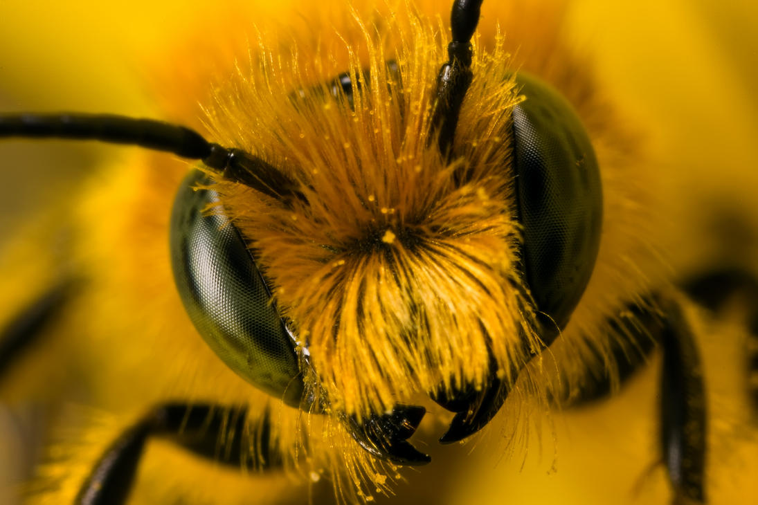 Miner Bee Head On II by dalantech on DeviantArt