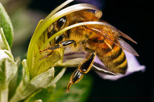 Pollinating by dalantech
