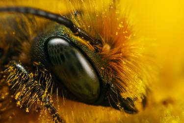 Miner Bee March 09-1 by dalantech
