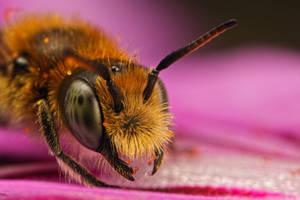 Miner Bee Portrait V by dalantech