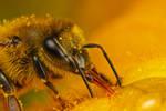 Honeybee Studio Shot