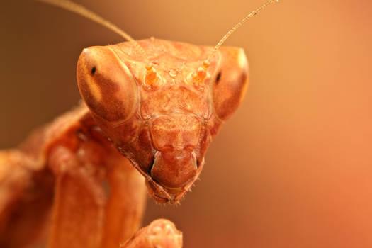Mantis Mania I