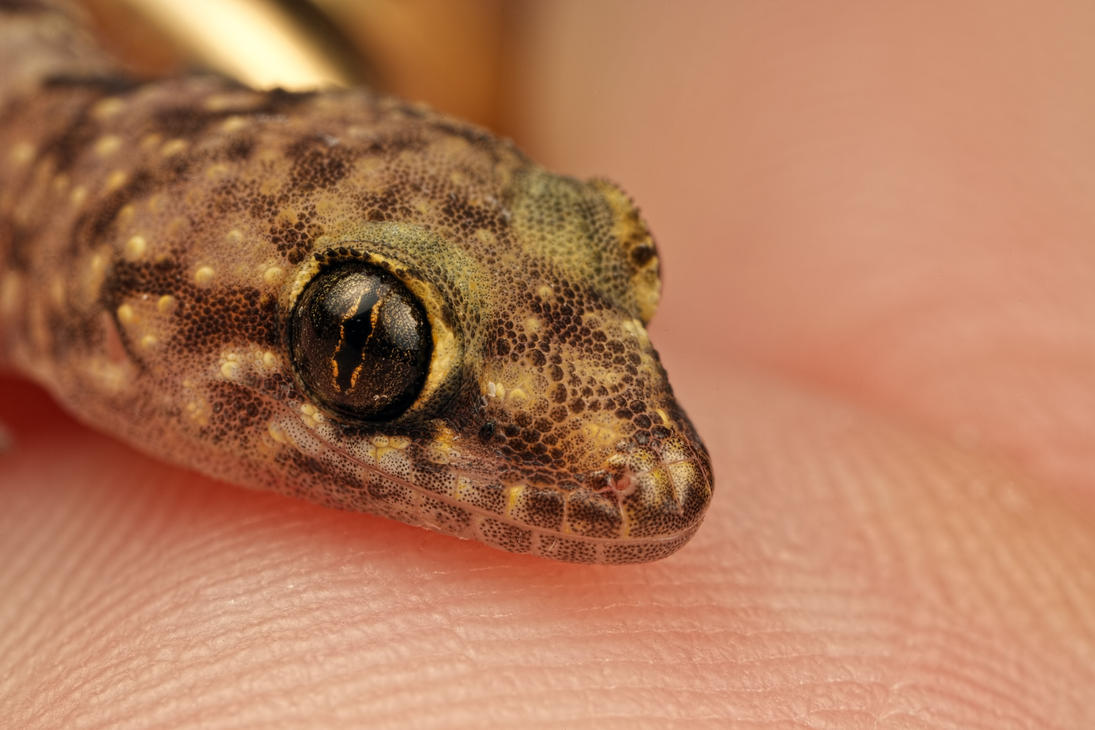 Rescued Gecko by dalantech