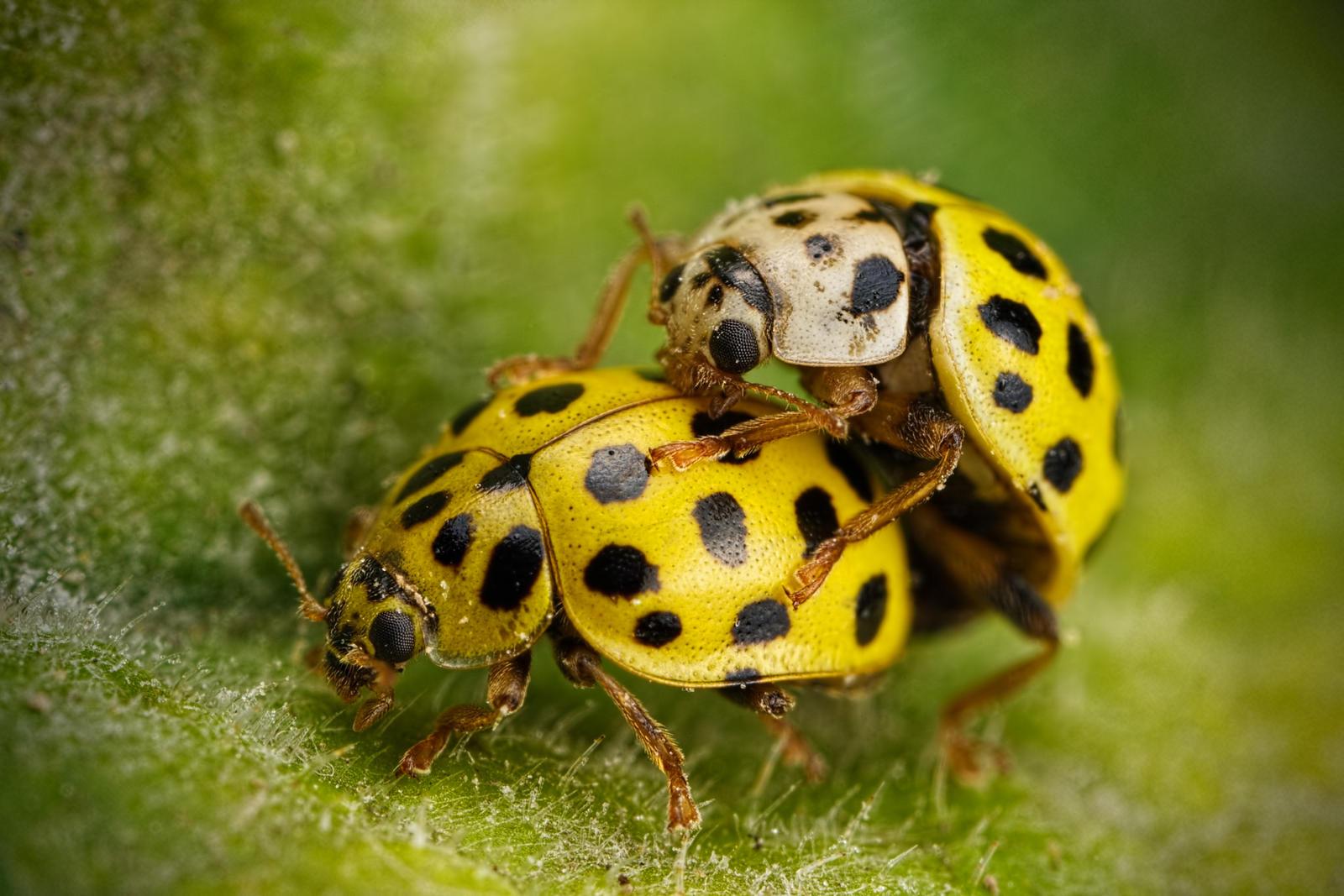 Love Bugs by dalantech
