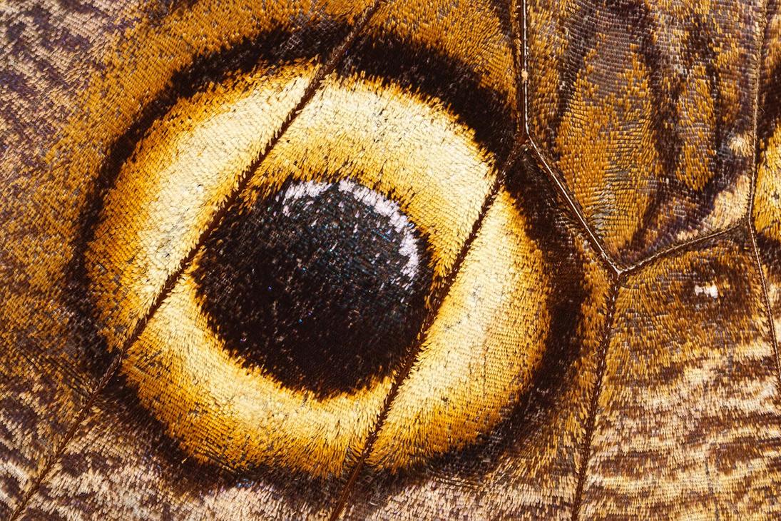 The Eye by dalantech